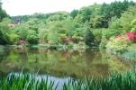 管理事務所裏の池